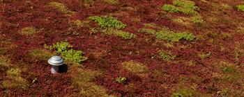 Types of flat green roof