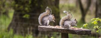Top 10 unusual home insurance claims - squirrels
